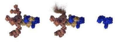 Xeomin 'Naked' Protein Horizontal